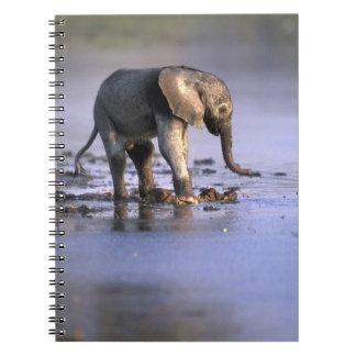 Botswana, reserva del juego de Moremi, elefante jo Libros De Apuntes Con Espiral