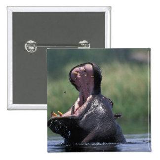 Botswana, reserva del juego de Moremi, Hippopotamu Pins