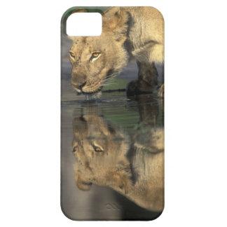 Botswana, reserva del juego de Moremi, leona iPhone 5 Funda