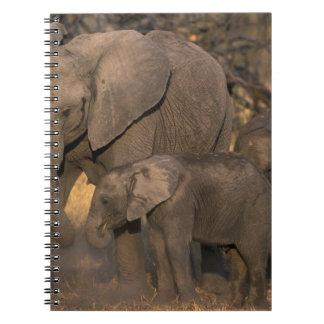 Botswana, reserva del juego de Moremi, manada del  Libros De Apuntes Con Espiral