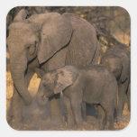 Botswana, reserva del juego de Moremi, manada del Pegatinas Cuadradases Personalizadas