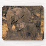 Botswana, reserva del juego de Moremi, manada del  Alfombrilla De Raton