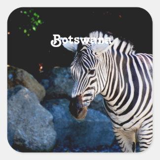 Botswana Zebra Square Stickers