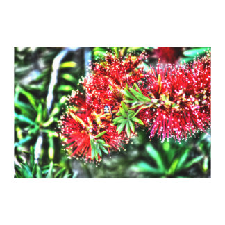 BOTTLE BRUSH FLOWER CALLISTEMON & BEE AUSTRALIA CANVAS PRINT