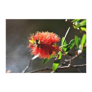 BOTTLE BRUSH FLOWER CALLISTEMON RURAL AUSTRALIA CANVAS PRINT