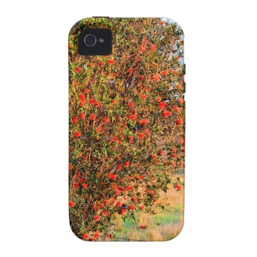 BOTTLE BRUSH TREE RURAL QUEENSLAND AUSTRALIA Case-Mate iPhone 4 CASES