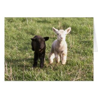 Bottle Lambs Card