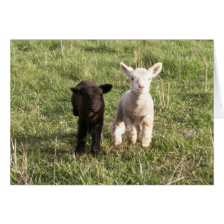 Bottle Lambs Greeting Card