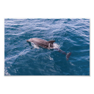 Bottle Nose Dolphin Photo Print