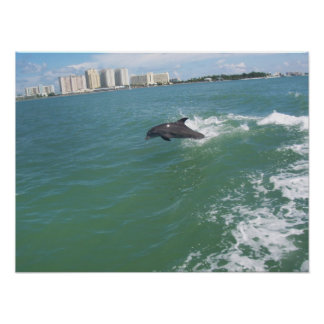 bottle nose dolphin taking a free ride posters