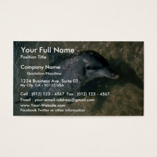 Bottle-nosed dolphin business card