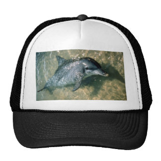 Bottle-nosed dolphin mesh hat