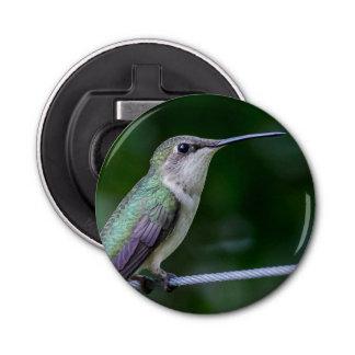 Bottle Opener Refrigerator Magnet - Hummingbird