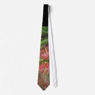Bottlebrush brillante corbatas