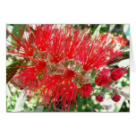 Bottlebrush Flower Red Floral Photography Card