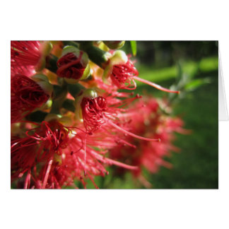 Bottlebrush Tendrils Card