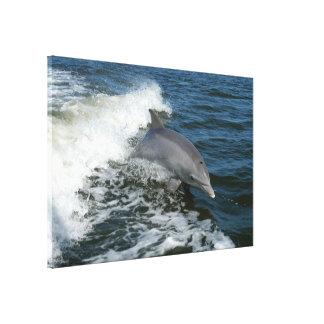 Bottlenose Dolphin 60 x 40 Canvas Print