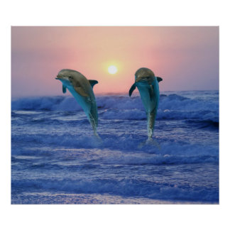 Bottlenose Dolphin at Sunrise Poster