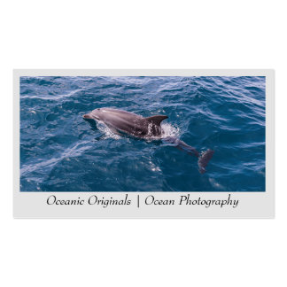 Bottlenose Dolphin Business Card Template