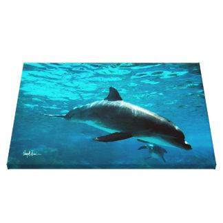 Bottlenose Dolphin Canvas Print