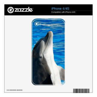Bottlenose Dolphin iPhone 4 Decal