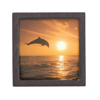 Bottlenose Dolphin jumping Premium Trinket Boxes