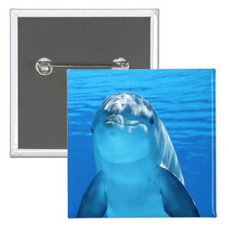 Bottlenose Dolphin looks at the camera under water Button