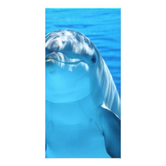 Bottlenose Dolphin looks at the camera under water Card