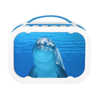 Bottlenose Dolphin looks at the camera under water Lunch Box