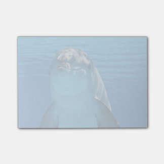Bottlenose Dolphin looks at the camera under water Post-it Notes