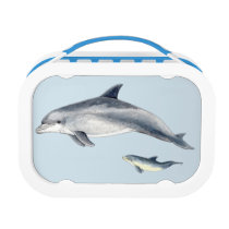 Bottlenose dolphin lunch box