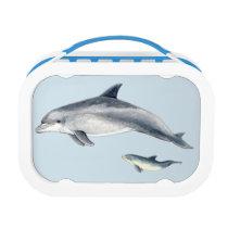 Bottlenose dolphin lunch box