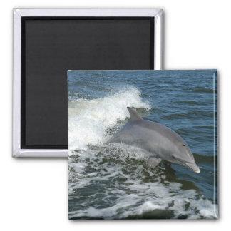 Bottlenose Dolphin Refrigerator Magnet