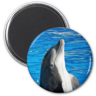 Bottlenose Dolphin Fridge Magnet