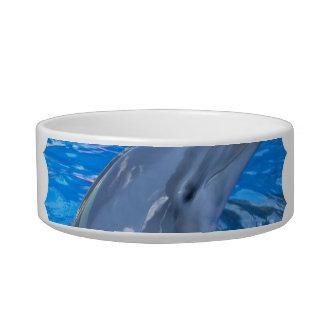 Bottlenose Dolphin  Pet Bowl Cat Food Bowls