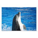 Bottlenose Dolphin Photo Art