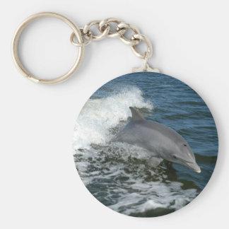 bottlenose dolphin photo keychain