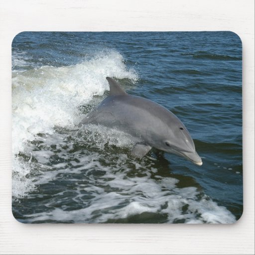bottlenose dolphin photo mousepad