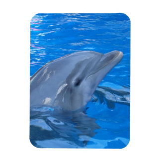 Bottlenose Dolphin Premium Magnet Flexible Magnet