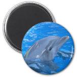 Bottlenose Dolphin Round Magnet Fridge Magnet