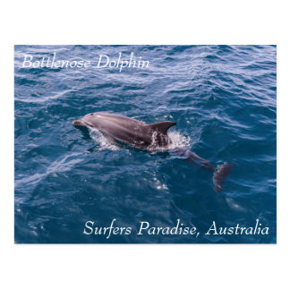 Bottlenose Dolphin Surfers Paradise Postcard