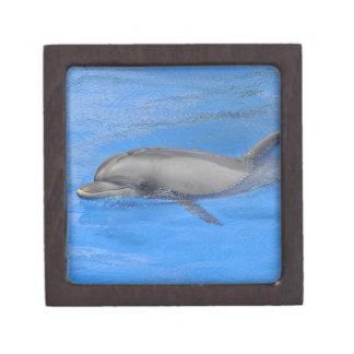 Bottlenose dolphin swimming jewelry box