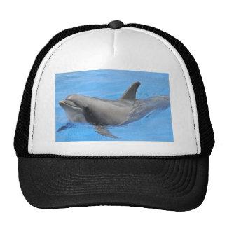 Bottlenose dolphin trucker hat