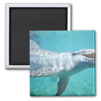 Bottlenose Dolphin Tursiops truncatus 2 Magnet