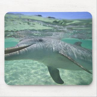 Bottlenose Dolphin Tursiops truncatus), 3 Mouse Pad