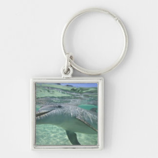 Bottlenose Dolphin Tursiops truncatus), 3 Silver-Colored Square Keychain
