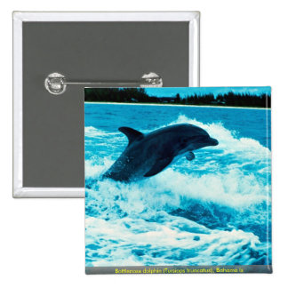 Bottlenose dolphin (Tursiops truncatus), Bahama Is Pinback Button