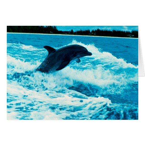 Bottlenose dolphin (Tursiops truncatus), Bahama Is Cards