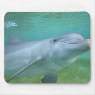 Bottlenose Dolphin Tursiops truncatus), Mousepads