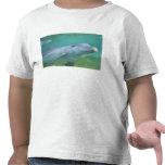 Bottlenose Dolphin Tursiops truncatus), Tee Shirts